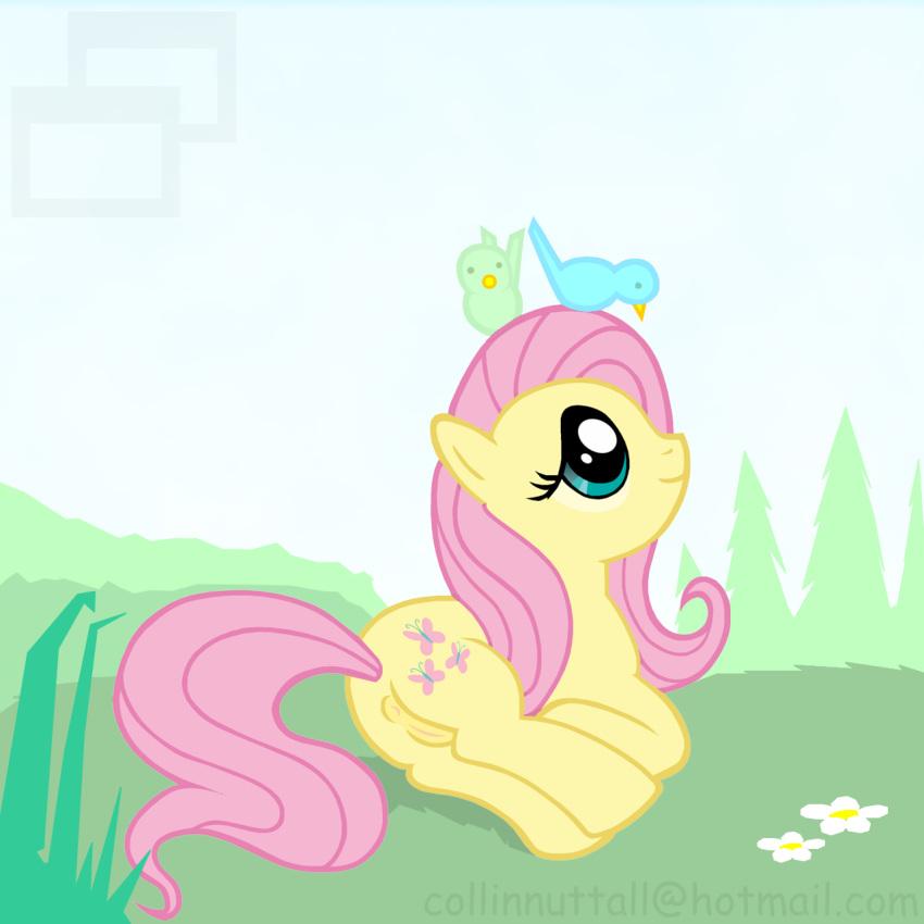 pony little fluttershy pictures my Li-fen street fighter